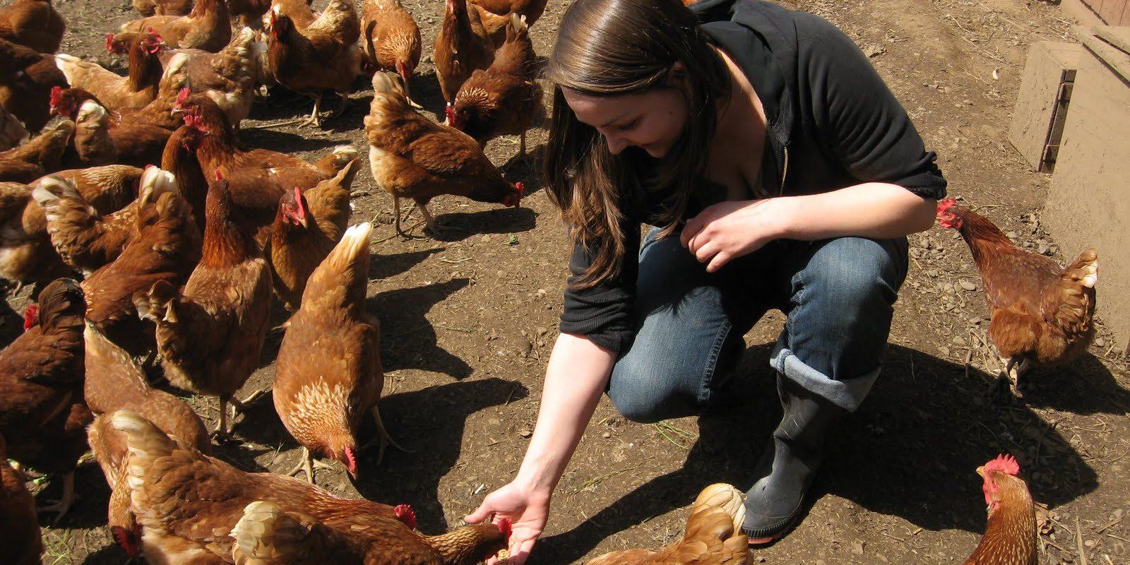 Potencial del productor avícola